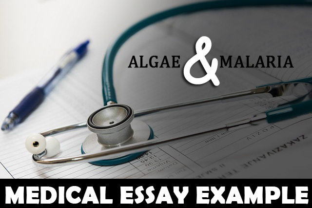Medical Essay Example: Algae & Malaria